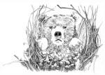 bear and tricksy chicks card © sally rendel